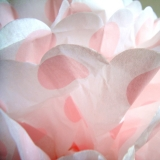"16"" Pink Dot Tissue Paper Pom Poms Ball -(4 pieces)"